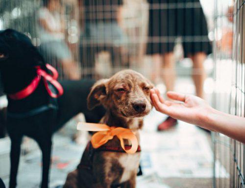 Hondencadeau: 4 leuke tips